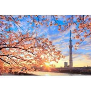 日本機+酒自由行(東京‧大阪‧東北‧琉球‧北海道)